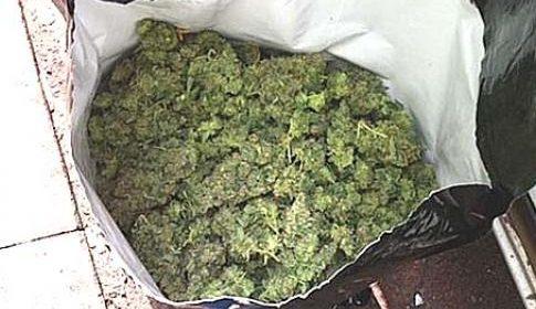 Nieuwegeiner aangehouden met 100 kilo hennep