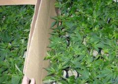 Aanhouding na vondst drie hennepkwekerijen in Nieuwegein