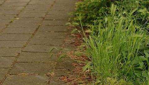Nieuwegein, een schone en groene stad?