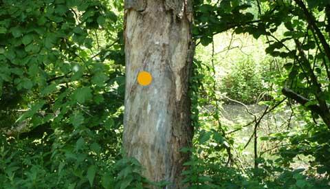 Bomen worden vanwege veiligheid gekapt