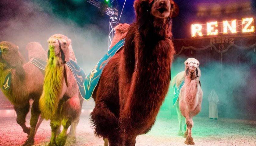 Win 5 vrijkaarten voor Circus Renz