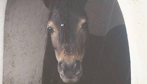 Pony en kip dood door 'kattenkwaad' in Dierenpark Sublime in de Galecopperzoom