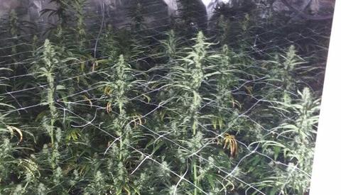 Politie vind hennepplantage in woning aan de Polkahof