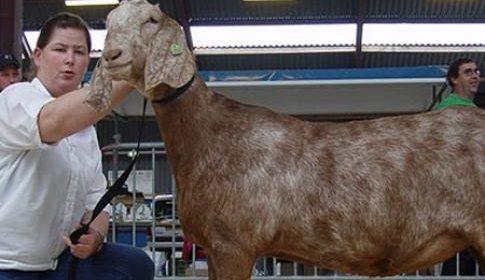 Jantine met de Pet: 'Vooruit met de geit!'