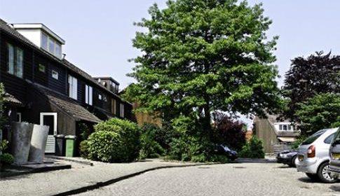 Nieuwegein gaat waarde van bomen in kaart brengen en u kunt meedoen!