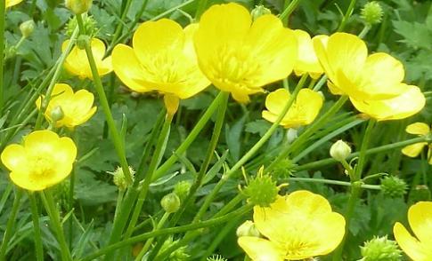 Determineren van wilde planten voor beginners