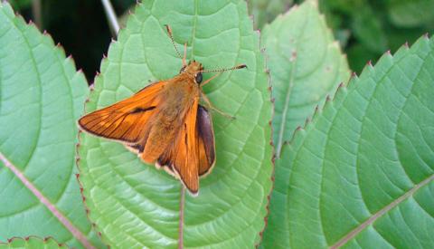 Insectenexcursie voor jong en oud in Hei- en Boeicop