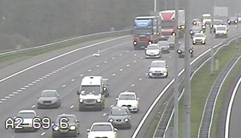 Zwaan hindert verkeer op A2 bij Nieuwegein