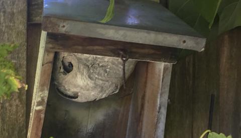 Tips om een wespennest te verwijderen