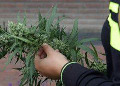 Politie voorkomt een ripdeal van acht kilo hennep in Nieuwegein