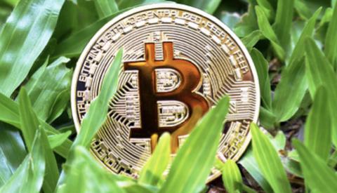 Cryptovaluta steeds populairder onder Nederlandse bevolking