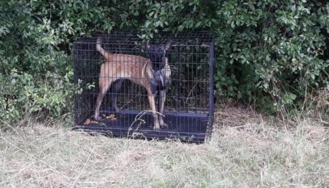 Gekooide hond achtergelaten op carpoolplaats Nieuwegein