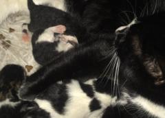 Poes verstopt haar vier kittens buiten en zijn onvindbaar