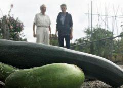 Duimendraaien voor Nieuwegeinse tuinders: kan oogst de prullenbak in?