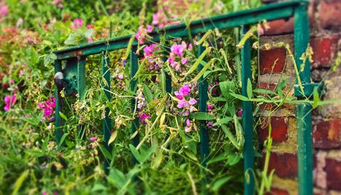 Tuinpoorten en tuindeuren