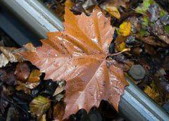 Regiotram Utrecht gaat komende nacht bladeren verwijderen op de trambaan