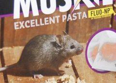 Rattenoverlast verdubbeld in Nieuwegein