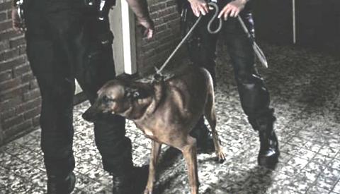 Politie neemt hond in beslag na bijtincident aan de Havelterschans