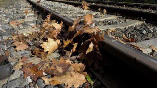 Bladeren van de trambaan