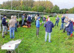 Groenonderhoud en zonnepanelen in Galecop; schapen kunnen het niet helemaal alleen aan!